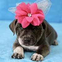 Adopt A Pet :: Coral - Picayune, MS