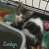Adopt A Pet :: Landyn - Harrisville, WV