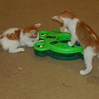 Adopt A Pet :: Noosa (7336) - Tampa, FL