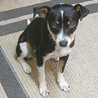 Adopt A Pet :: Kudu (GA) - Atlanta, GA