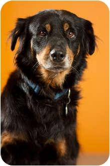Australian Shepherd Mix Dog for adoption in Portland, Oregon - Maxxi