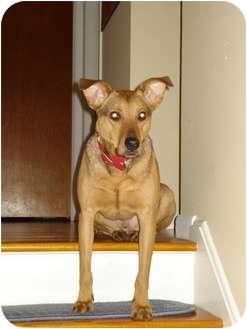 German Shepherd Dog Mix Dog for adoption in Rochester/Buffalo, New York - Parker - Courtesy Post