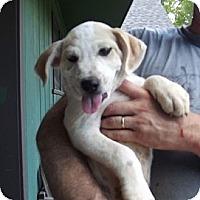 Adopt A Pet :: Rae - Danbury, CT