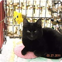 Adopt A Pet :: Adam - Riverside, RI