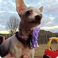 Adopt A Pet :: Blair - Baton Rouge, LA