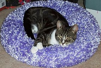 Domestic Shorthair Cat for adoption in New City, New York - Barn Cats Available