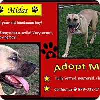 Adopt A Pet :: Midas - El Campo, TX