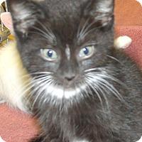 Adopt A Pet :: WISKAS - Acme, PA