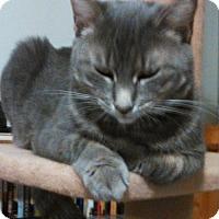 Adopt A Pet :: Gracie - Brooklyn, NY