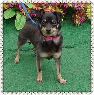 Chihuahua Mix Dog for adoption in Marietta, Georgia - MINNIE