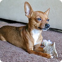 Adopt A Pet :: Waldo. . . - Los Angeles, CA