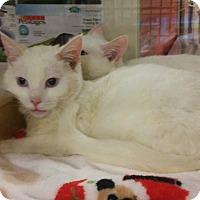 Adopt A Pet :: ASPEN - Mesa, AZ