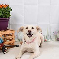 Adopt A Pet :: Wyn - Jackson, TN