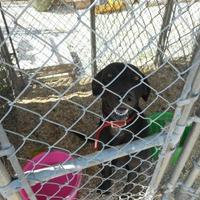 Adopt A Pet :: kali - Opelousas, LA
