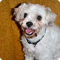 Adopt A Pet :: Vincent - Albemarle, NC
