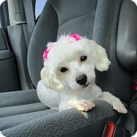 Adopt A Pet :: Angie Marley - Shawnee Mission, KS