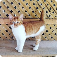 Adopt A Pet :: Red - Taylorsville, IN