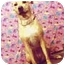 Photo 3 - Labrador Retriever/Whippet Mix Dog for adoption in New York, New York - Hope