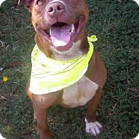 Adopt A Pet :: Ginger - Crescent City, CA