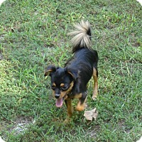 Adopt A Pet :: Lara - North Little Rock, AR