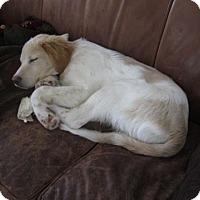 Adopt A Pet :: Jinger - Minneapolis, MN