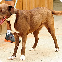 Adopt A Pet :: Jubilee - Lewisville, IN