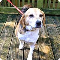 Adopt A Pet :: Andy - Pawling, NY