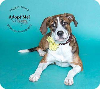 Hound (Unknown Type)/St. Bernard Mix Dog for adoption in Seattle, Washington - Ava