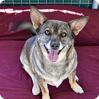Adopt A Pet :: Bandit - Acton, CA