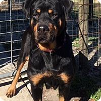 Adopt A Pet :: Angela - Alachua, GA