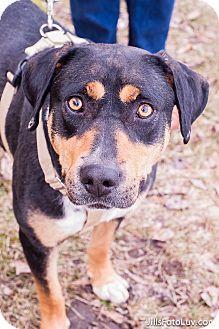 Rottweiler/Hound (Unknown Type) Mix Dog for adoption in Richmond, Virginia - Weezie