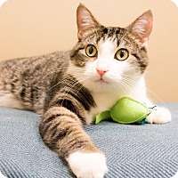 Adopt A Pet :: Mick - Chicago, IL