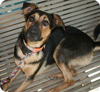 German Shepherd Dog Mix Dog for adoption in White Settlement, Texas - Deigo