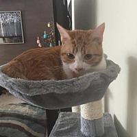 Adopt A Pet :: Carmel - Rochester, NY