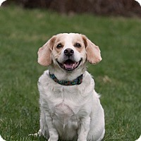 Adopt A Pet :: Orson - Drumbo, ON