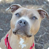 Adopt A Pet :: Arianna - THREE RIVERS, MA