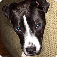 Adopt A Pet :: Rosie - Leesburg, VA