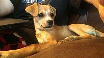 Terrier (Unknown Type, Medium) Mix Dog for adoption in Visalia, California - Mila