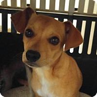 Adopt A Pet :: Edgar - Forreston, TX