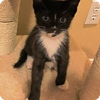 Adopt A Pet :: Yoda - Riverside, CA