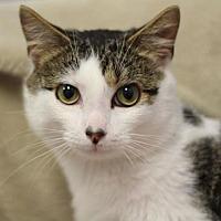 Adopt A Pet :: Massey - Raleigh, NC
