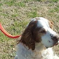 Adopt A Pet :: TX/Albert - Oklahoma, OK