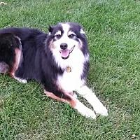 Adopt A Pet :: Carver - Minneapolis, MN