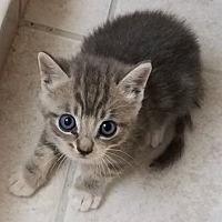 Adopt A Pet :: Bentley - Boynton Beach, FL