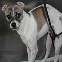 Adopt A Pet :: A1725255 - Los Angeles, CA