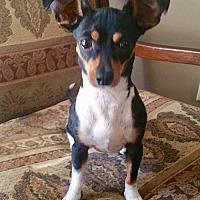 Adopt A Pet :: Izzy (GA) - Atlanta, GA