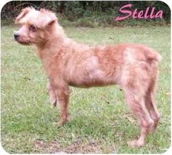 Yorkie, Yorkshire Terrier Mix Dog for adoption in Ozark, Alabama - Stella