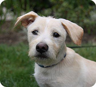Terrier (Unknown Type, Medium) Mix Puppy for adoption in Newport Beach, California - EDSEL