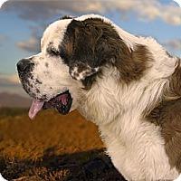 Adopt A Pet :: FINNEGAN - Glendale, AZ