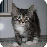 Adopt A Pet :: Demi - Shelton, WA